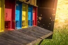 Colmena de la abeja del color Fotografía de archivo libre de regalías