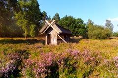 Colmena de la abeja en el brezo de Luneburg Imagenes de archivo
