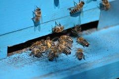 Colmena de la abeja en el golpecito-agujero Fotografía de archivo libre de regalías