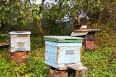 Colmena de la abeja en jardín Foto de archivo libre de regalías