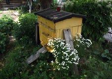 Colmena de la abeja en jardín Imagen de archivo libre de regalías