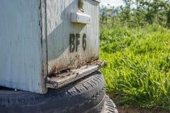 Colmena de la abeja en la plantación Fotografía de archivo libre de regalías