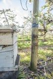 Colmena de la abeja en la plantación de la pera Imagen de archivo libre de regalías