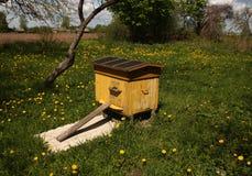Colmena de la abeja en primavera Foto de archivo