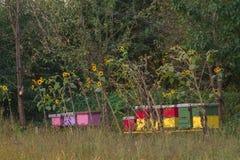 Colmena de la abeja en un campo Fotografía de archivo libre de regalías