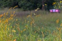 Colmena de la abeja en un campo Imagenes de archivo