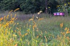 Colmena de la abeja en un campo Imágenes de archivo libres de regalías