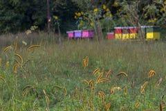Colmena de la abeja en un campo Foto de archivo libre de regalías
