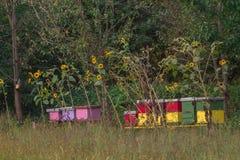 Colmena de la abeja en un campo Imagen de archivo