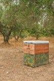 Colmena de la abeja en un campo del olivo Fotos de archivo libres de regalías