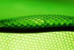 Colmena de la abeja en verde Fotografía de archivo
