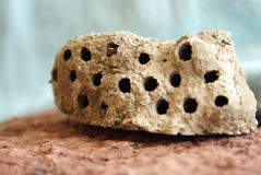 Colmena de la avispa del fango Imagen de archivo libre de regalías