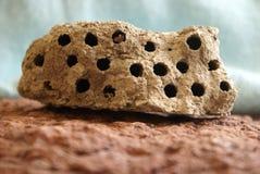 Colmena de la avispa del fango Foto de archivo libre de regalías