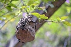 Colmena de la avispa en la pérgola del parque Imagen de archivo