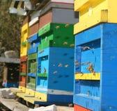 Colmena de las abejas de la miel Fotografía de archivo