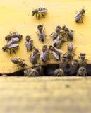 Colmena de las abejas de la miel Foto de archivo