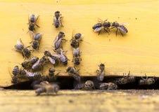 Colmena de las abejas de la miel Imagen de archivo libre de regalías