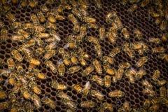Colmena de las abejas del primer Foto de archivo
