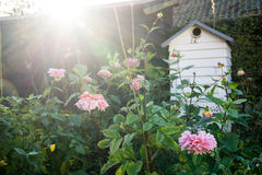Colmena detrás de las flores y de las plantas Fotografía de archivo
