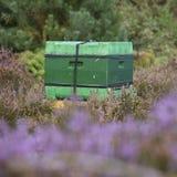 Colmena en el brezo floreciente en Holanda Fotos de archivo libres de regalías