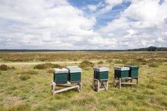 Colmena en el parque nacional Hoge Veluwe Fotos de archivo
