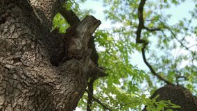 Colmena en el tronco de árbol - part7 metrajes