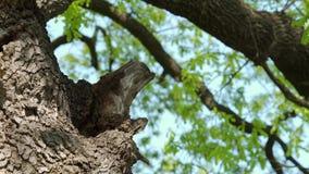Colmena en el tronco de árbol - parte 6 almacen de metraje de vídeo