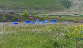 Colmena en un campo de la manzanilla Fotos de archivo libres de regalías