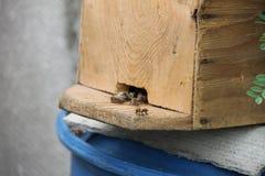 Colmena en un primer azul del barril con las abejas que pululan alrededor Imágenes de archivo libres de regalías