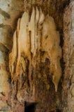 Colmena expuesta de la abeja en la pared de ladrillo Fotos de archivo libres de regalías