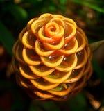 Colmena Ginger Lily Imágenes de archivo libres de regalías