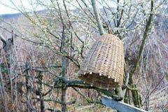 Colmena hecha a mano para capturar los enjambres de la abeja en naturaleza Fotografía de archivo libre de regalías