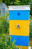 Colmena hermosa de las abejas con la pintura amarillo-azul Las abejas traen el polen a Fotos de archivo libres de regalías