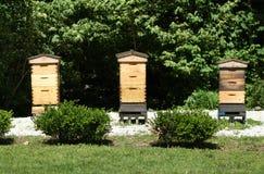 Colmena Honey Farm de la abeja Fotografía de archivo