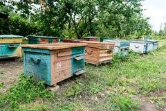 Colmena - la casa de abejas en el pecho de la naturaleza Apicultor del trabajo Producto curativo de la apicultura Mayo, miel de l Imágenes de archivo libres de regalías
