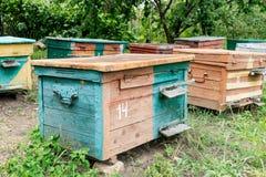Colmena - la casa de abejas en el pecho de la naturaleza Apicultor del trabajo Producto curativo de la apicultura Mayo, miel de l Imagenes de archivo