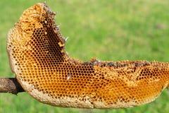 Colmena natural de la abeja fotografía de archivo