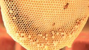 Colmena natural de la abeja Fotos de archivo