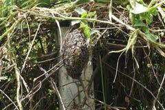 Colmena natural de la abeja Foto de archivo libre de regalías