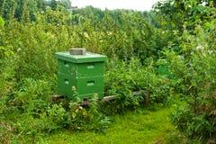 Colmena orgánica de la abeja de la miel Imagen de archivo