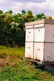 Colmena por las abejas Fotos de archivo libres de regalías