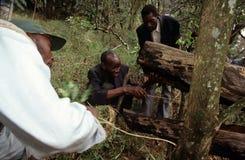Colmena que cultiva, Uganda Foto de archivo