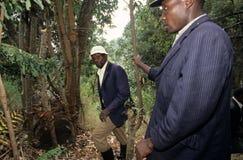Colmena que cultiva, Uganda Imagenes de archivo
