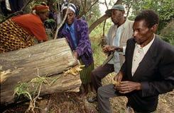 Colmena que cultiva, Uganda Imagen de archivo