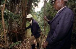 Colmena que cultiva, Uganda Fotografía de archivo
