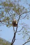 Colmena salvaje de la abeja Imagen de archivo libre de regalías