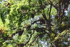 Colmena salvaje de las abejas en árbol Fotos de archivo