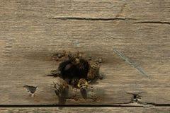 Colmena vieja de la abeja con las abejas en la entrada Fotos de archivo libres de regalías