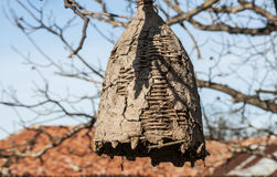Colmena vieja para las abejas salvajes Imagen de archivo