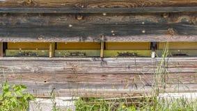 Colmena y abejas Fotografía de archivo